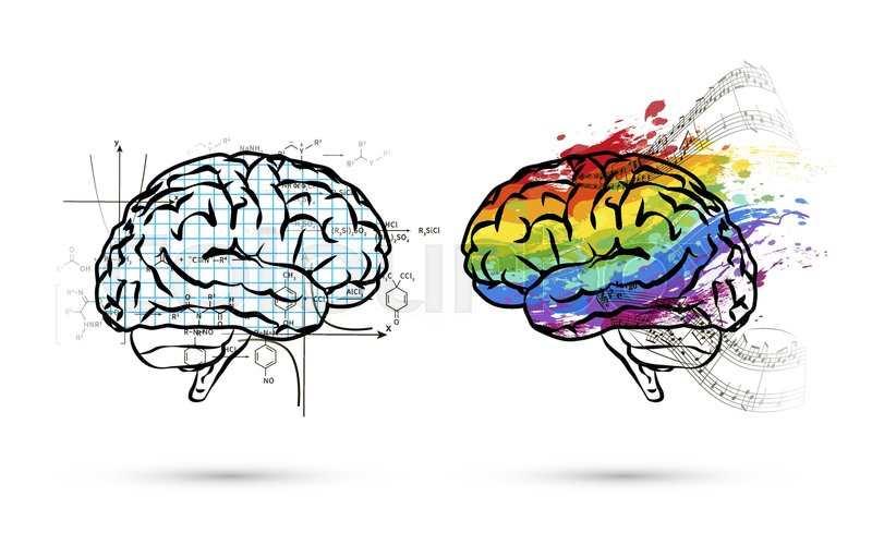 نیمکره های چپ و راست مغز
